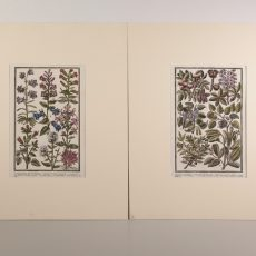 Xilografia con botanica acquerellata a mano